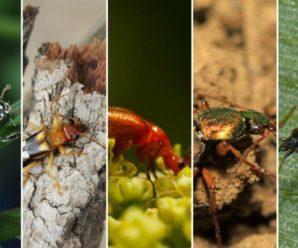 Где купить надежные инструменты для борьбы с насекомыми?